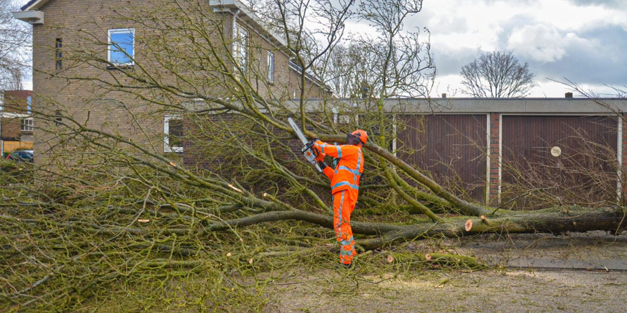 Lastige bomen dankzij Evert