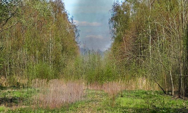 Ruigtebrand aan Poortweg in Ter Apel